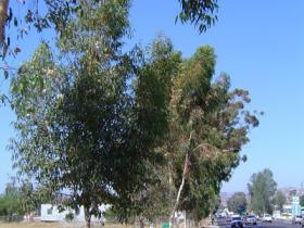 librarytrees6