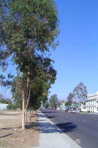 librarytrees2